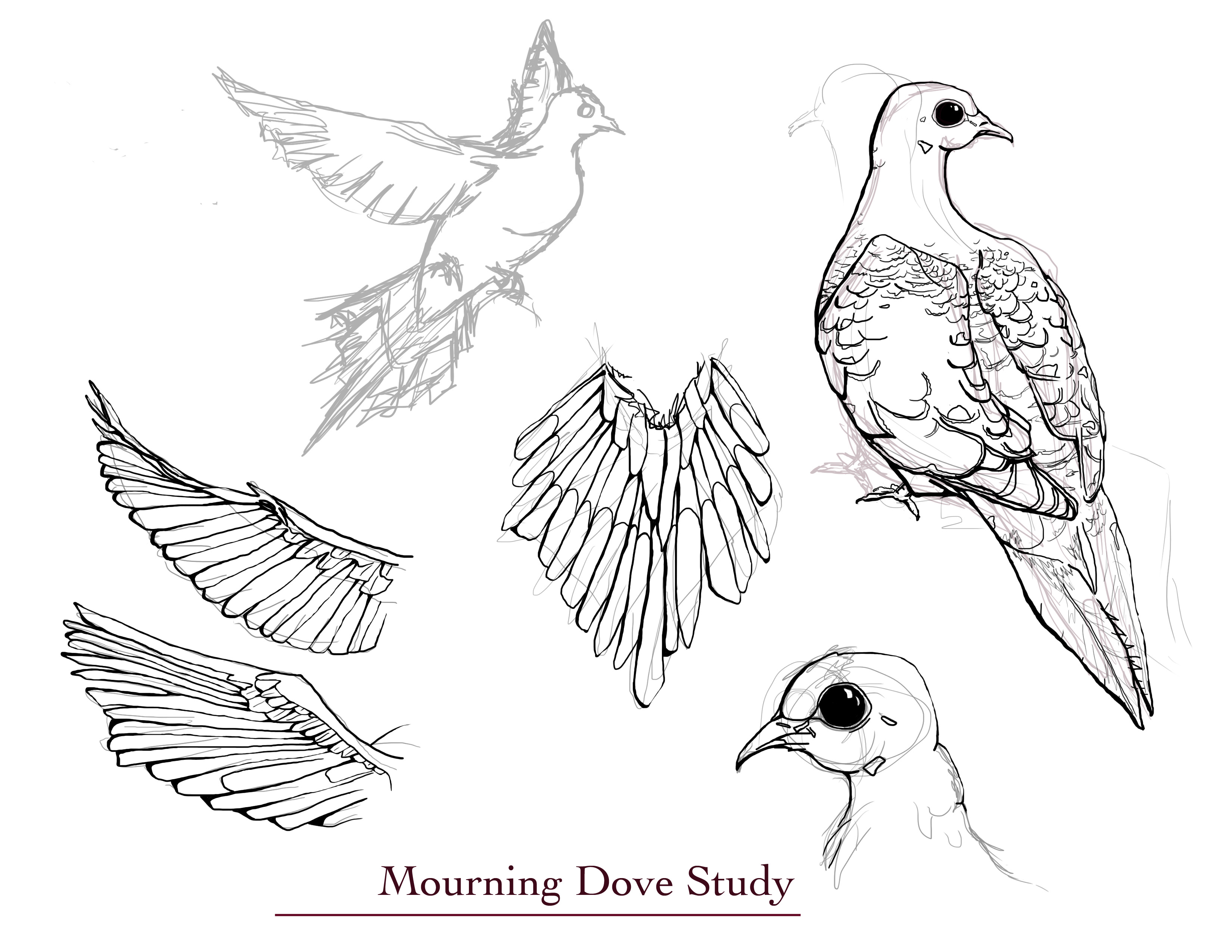 Sketch Of A Dove Out Several Illustrations I